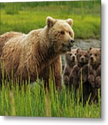 Brown Bear Sow And Cubs, In The Long Metal Print