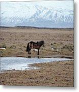 Brown Icelandic Horse In Profile Near Stream Metal Print