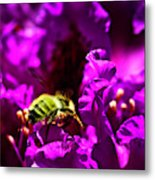 Bumble Bee On A Rhodedendron  Metal Print