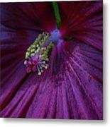 Burgundy Hibiscus Metal Print
