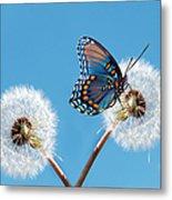 Butterfly On Dandelion Metal Print