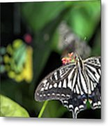Butterfly Perfect Metal Print