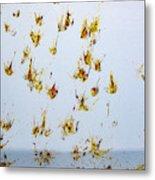Butterfly Splash Metal Print