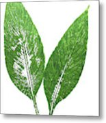 Cannas Leaves Metal Print