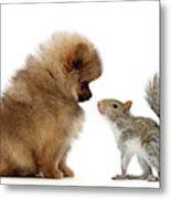 Careful I May Contain Nuts Metal Print