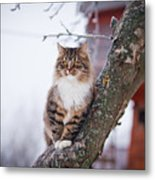 Cat Outdoors In The Winter Is On The Metal Print