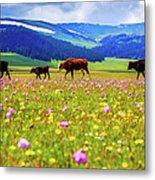 Cattle Walking In Grassland Metal Print
