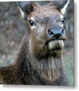Caught With A Mouthful Metal Print