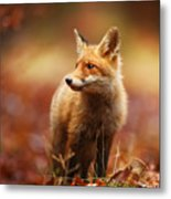 Cautious Fox Stopped At The Edge Of The Metal Print
