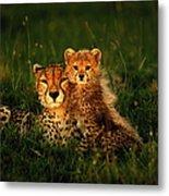 Cheetah Acinonyx Jubatus With Cubs In Metal Print