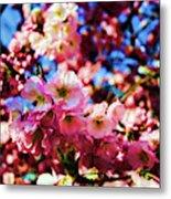 Cherry Blossoms 1 Metal Print