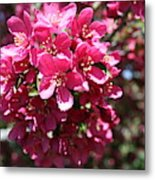 Cherry Blossoms 2019 Iv Metal Print