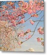 Cherry Blossoms At The Tidal Basin Metal Print