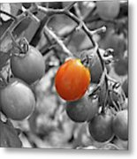 Cherry Tomatoes Partial Color Metal Print