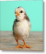 Chick On Wood Metal Print