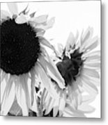 Classic Sunflowers Metal Print