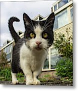 Close Up Cat On The Street Metal Print