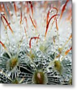 Close Up Of Globe Shaped Cactus With Metal Print
