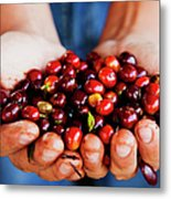Close Up Of Hands Holding Coffee Beans Metal Print