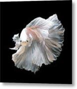 Close Up Of White Platinum Betta Fish Metal Print