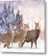 Close Young Deer In Nature. Winter Time Metal Print