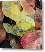 Collective Autumn Color Metal Print