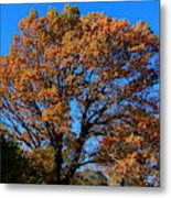 Colours At The Front Metal Print