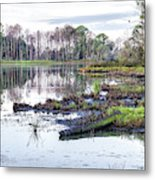 Coosaw - Early Morning Rice Field Metal Print