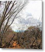 Cottonwood Arizona Jail Trail Trees Path Sky Clouds 5229 Metal Print