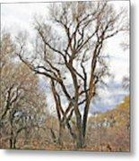 Cottonwood Az Bayou Leafless Tree Sky Clouds Path 31262019  Metal Print