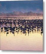 Cranes At Dawn Metal Print