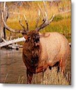 Creekside Bull Metal Print