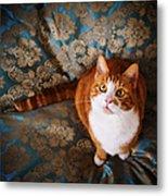 Cute Cat Named Nisse Metal Print