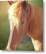 Cute Chestnut Pony Metal Print