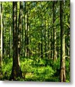Cypress Trees Metal Print