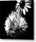 Daisy And Thistle Black And White Metal Print