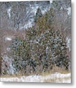 Dakota West In Winter Metal Print