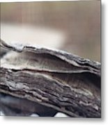 Decaying Book  Metal Print