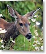 Deer In Daisies Metal Print