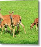 Deer Looking At You Metal Print