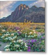 Desert Sand Verbena, Desert Sunflower Metal Print