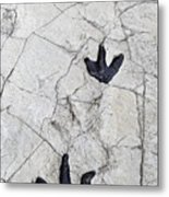 Detail Of Dinosaur Tracks In Spain Metal Print