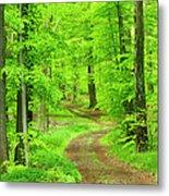 Dirt Road Through Lush Beech Tree Metal Print
