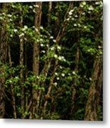 Dogwood Tree 2 Metal Print