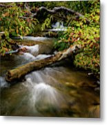 Dogwoods Along The Provo Deer Creek Metal Print