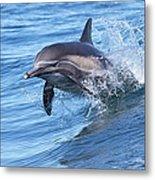 Dolphin Riding Wake Metal Print