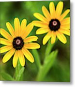 Double Daisies Metal Print