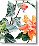 Double Orange Hibiscus With Buds Metal Print