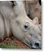 Double Rhino Metal Print