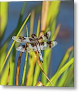 Dragonfly Perched By Pond Metal Print